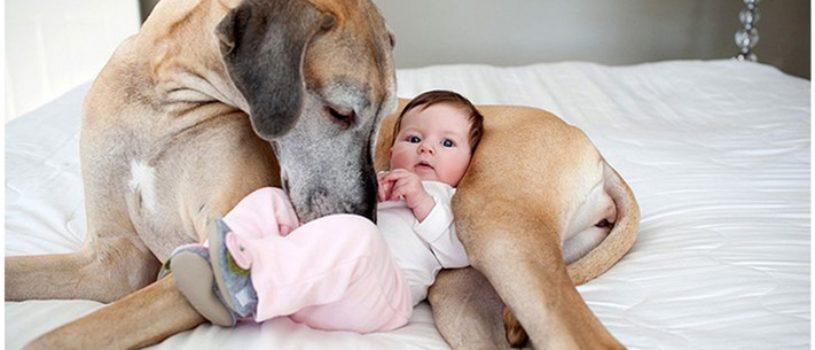 22 потрясающие фотографии дружбы больших собак и детей