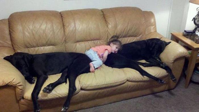 22 потрясающие фотографии дружбы больших собак и детей 9