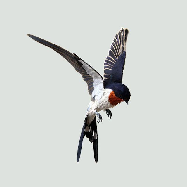 Бумажные скульптуры птиц Diana Beltran Herrera 1