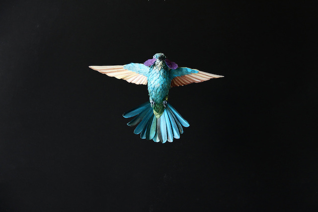 Бумажные скульптуры птиц Diana Beltran Herrera 2