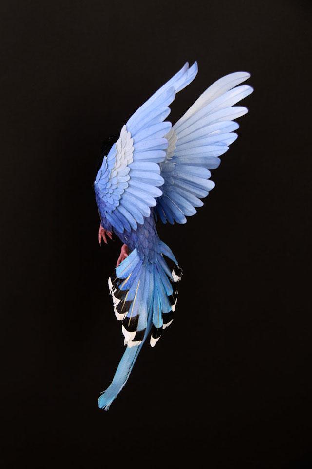 Бумажные скульптуры птиц Diana Beltran Herrera 5