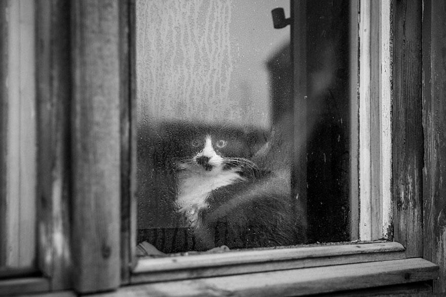 Кошка у окошка 1