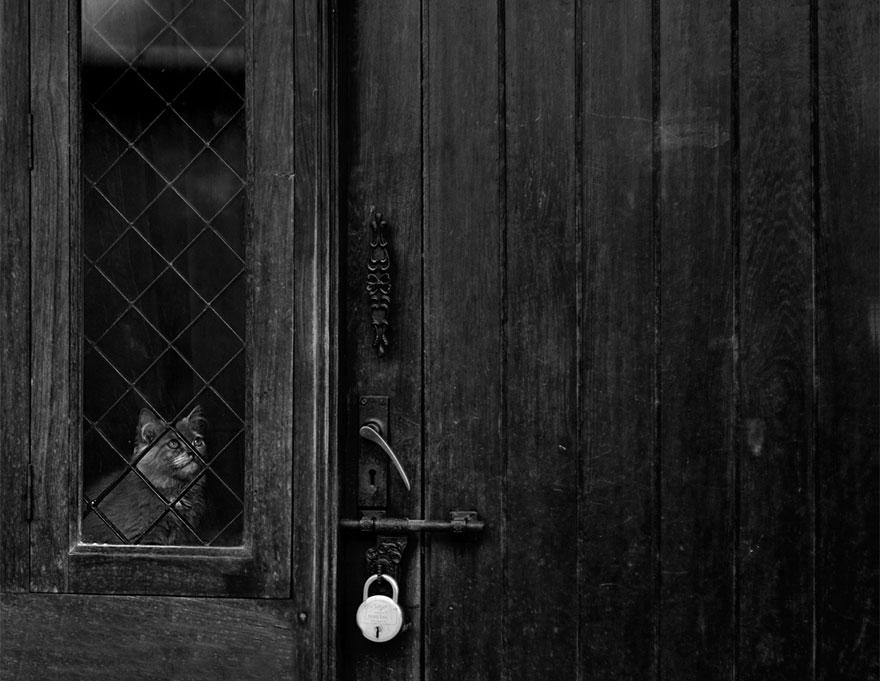 Кошка у окошка 10