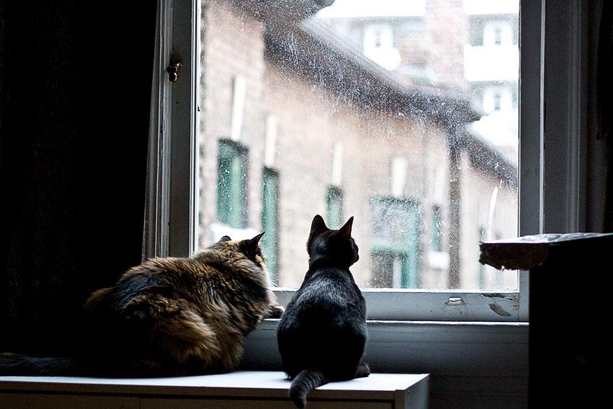 Кошка у окошка 11