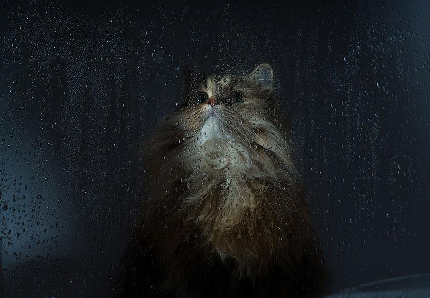 Кошка у окошка 13