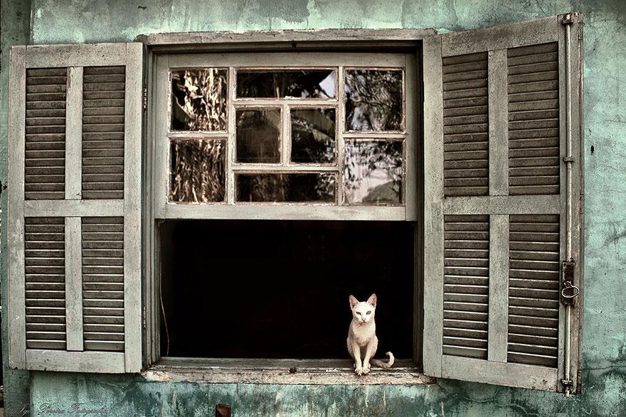 Кошка у окошка 14