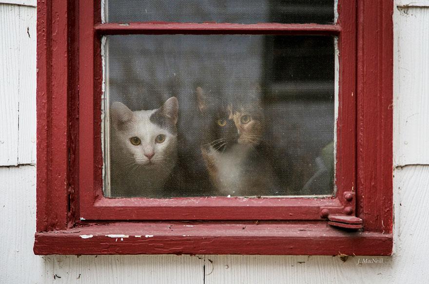 Кошка у окошка 15