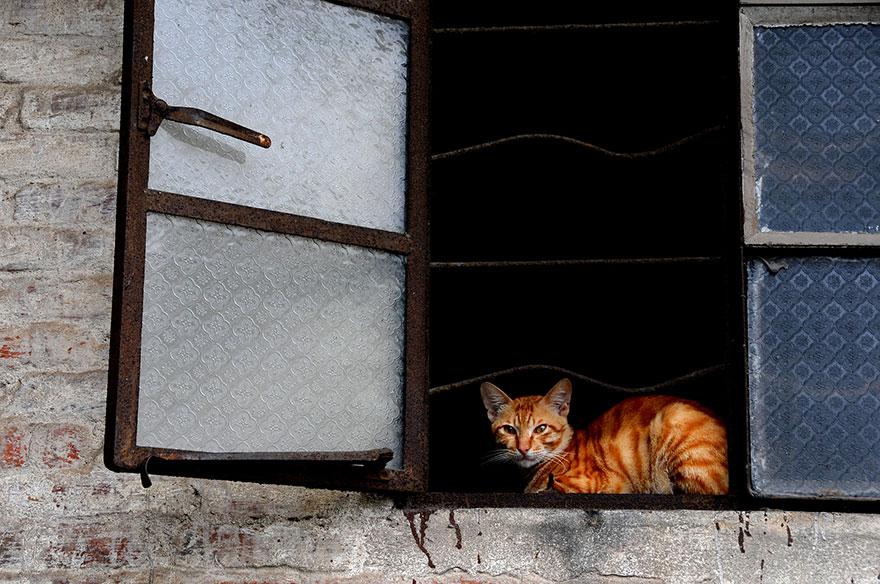 Кошка у окошка 16