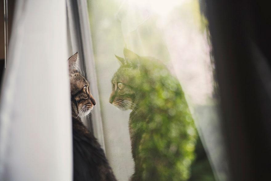 Кошка у окошка 18
