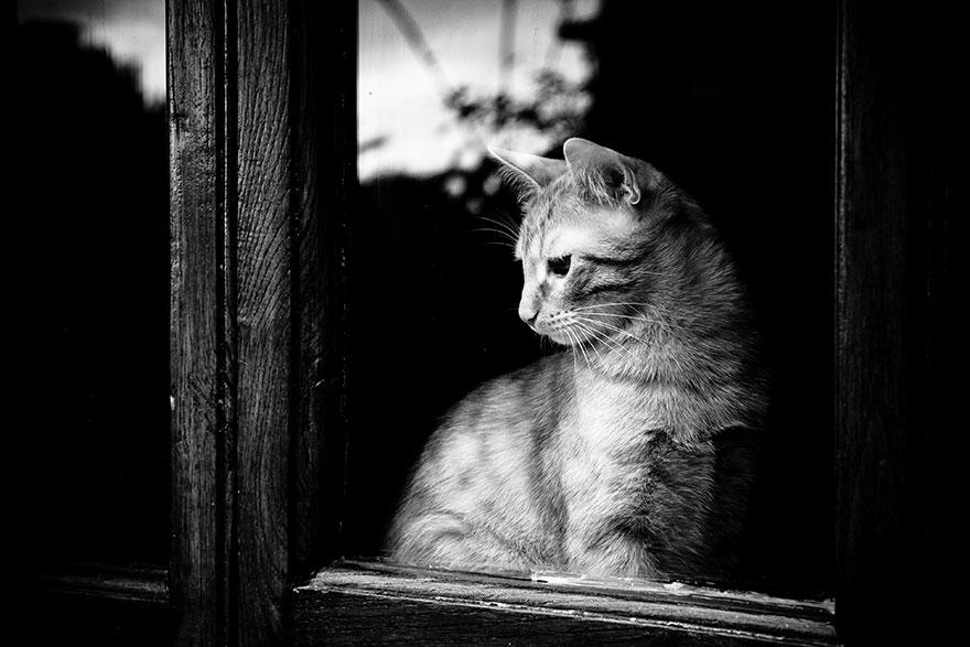 Кошка у окошка 19