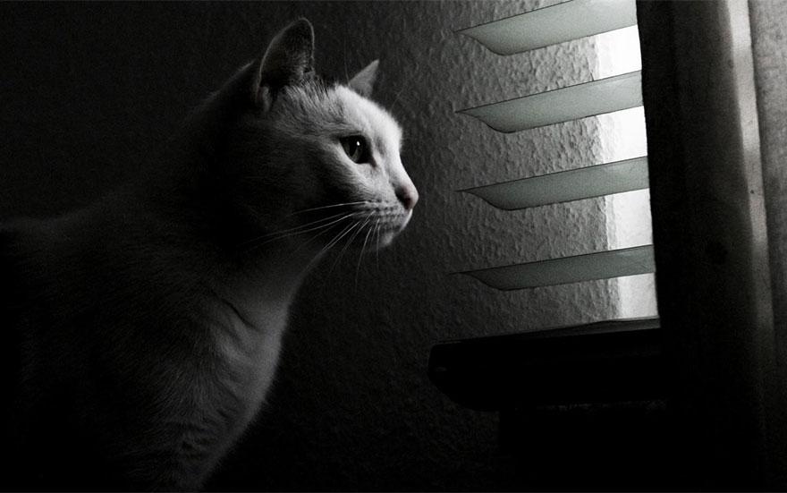 Кошка у окошка 2