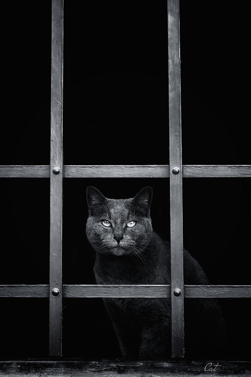 Кошка у окошка 20