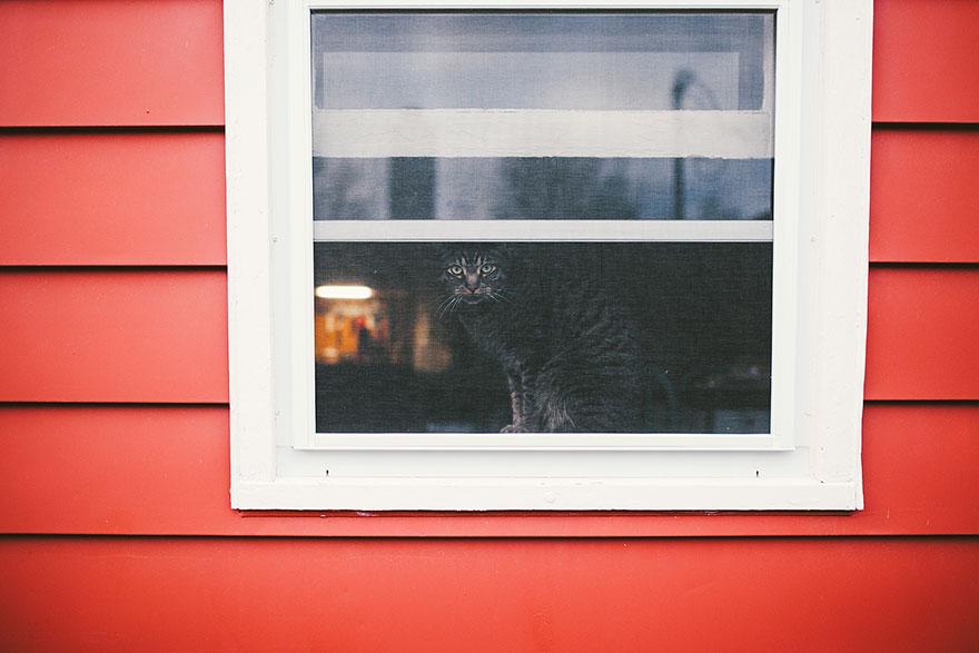 Кошка у окошка 22