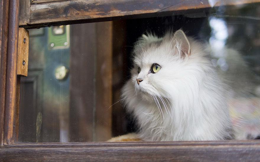 Кошка у окошка 24