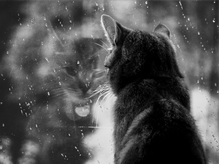 Кошка у окошка 25