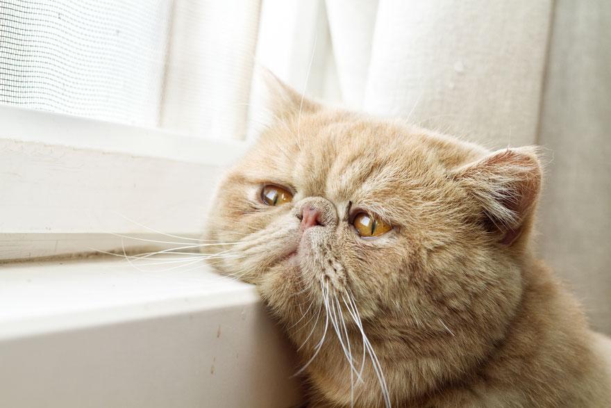 Кошка у окошка 26