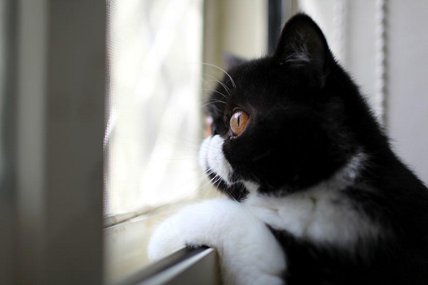Кошка у окошка 27