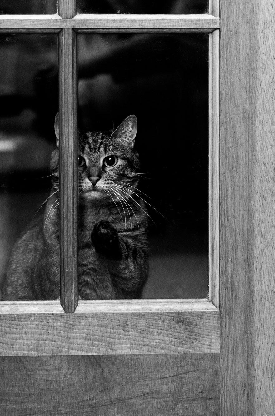 Кошка у окошка 28