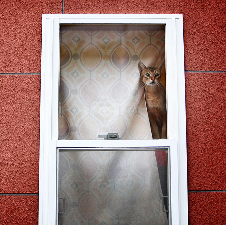 Кошка у окошка 3