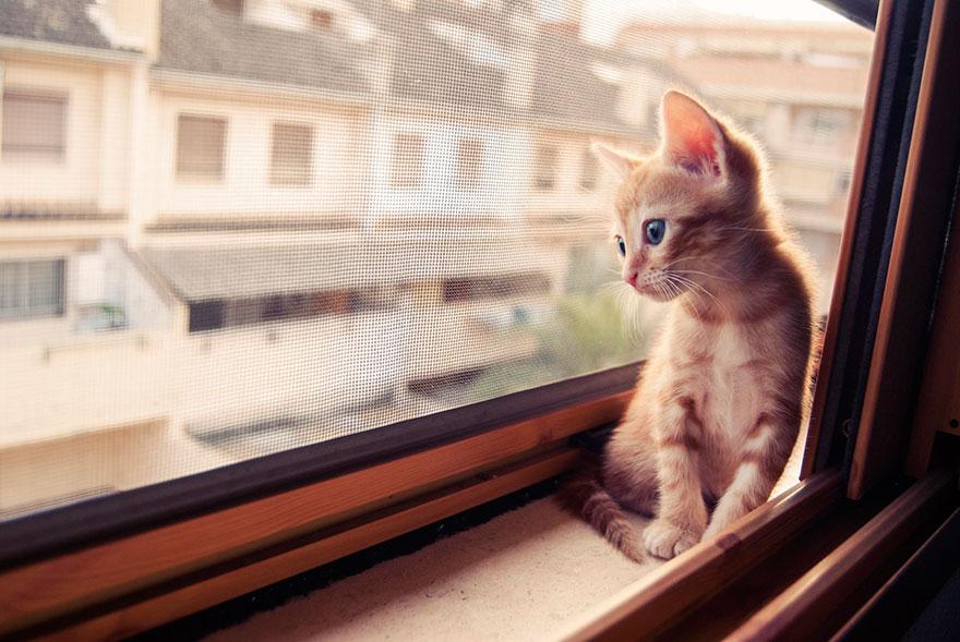 Кошка у окошка 4