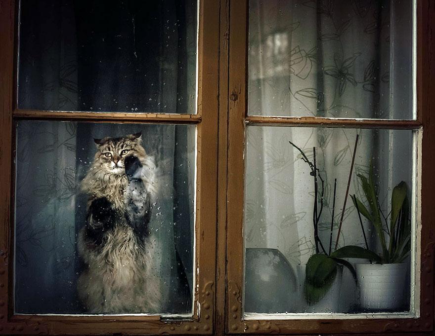Кошка у окошка 5