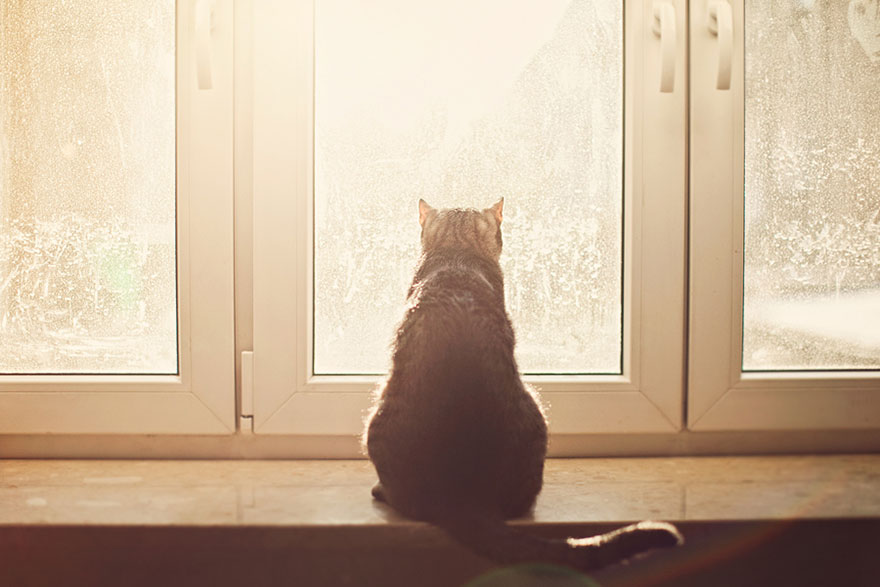 Кошка у окошка 6