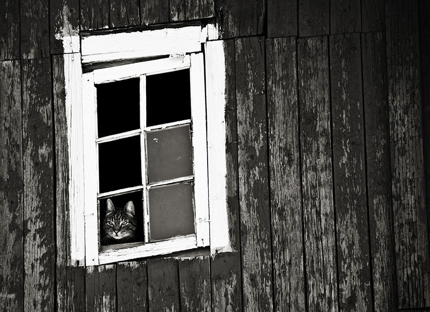Кошка у окошка 7
