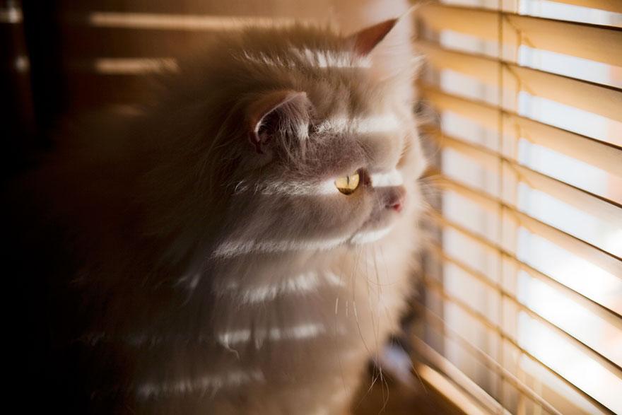 Кошка у окошка 8