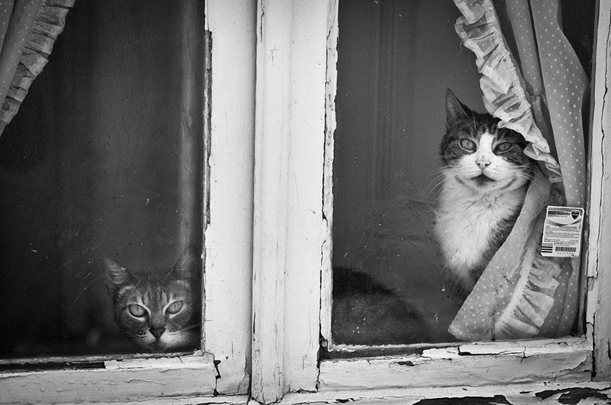 Кошка у окошка 9