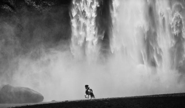 Черные и белые фотографии диких животных Дэвида Ярроу  12