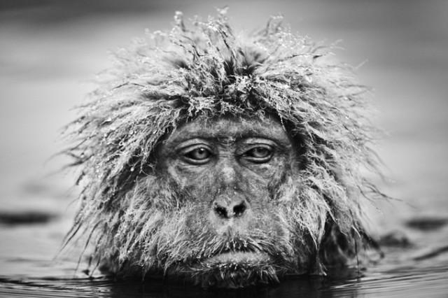Черные и белые фотографии диких животных Дэвида Ярроу  3