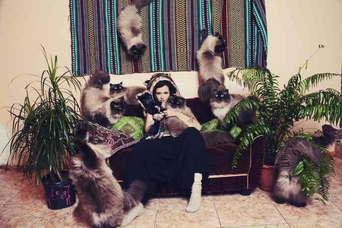 Сумасшедшие любители кошек 1