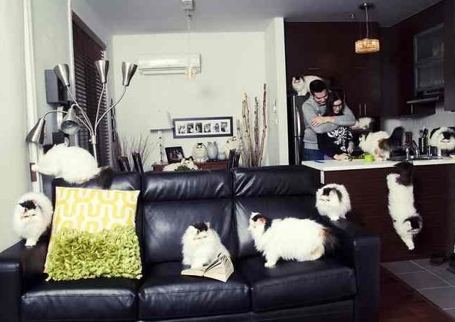 Сумасшедшие любители кошек 10