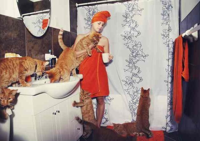 Сумасшедшие любители кошек 3