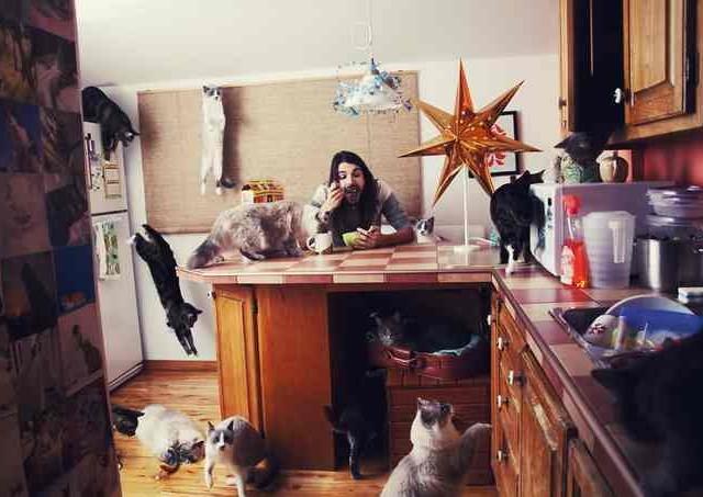 Сумасшедшие любители кошек 4