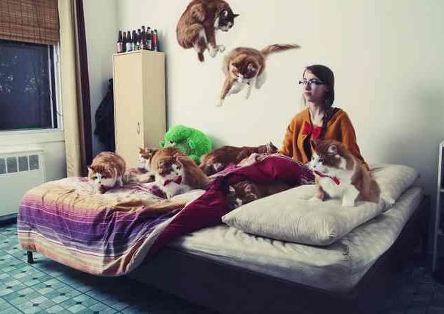 Сумасшедшие любители кошек 6