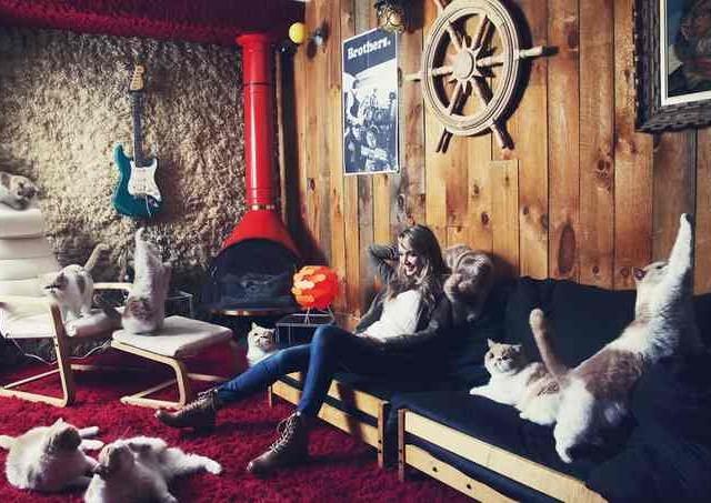 Сумасшедшие любители кошек 7