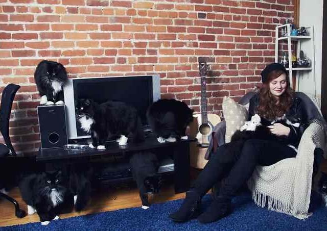 Сумасшедшие любители кошек 8