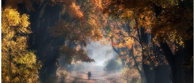 Польская осень в фотографиях Пшемыслава Крука