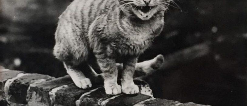 Тайная жизнь кошек на улицах послевоенного Лондона
