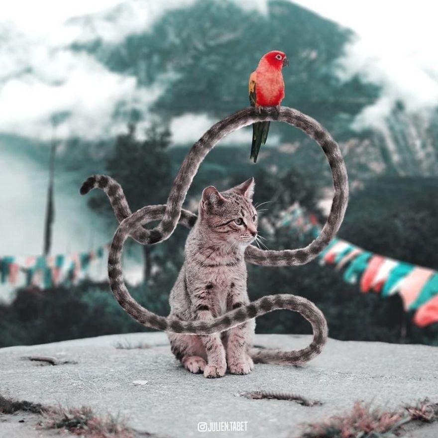 Коллаж кошки и попугая