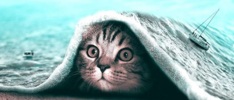 25 абсурдных коллажа с животными