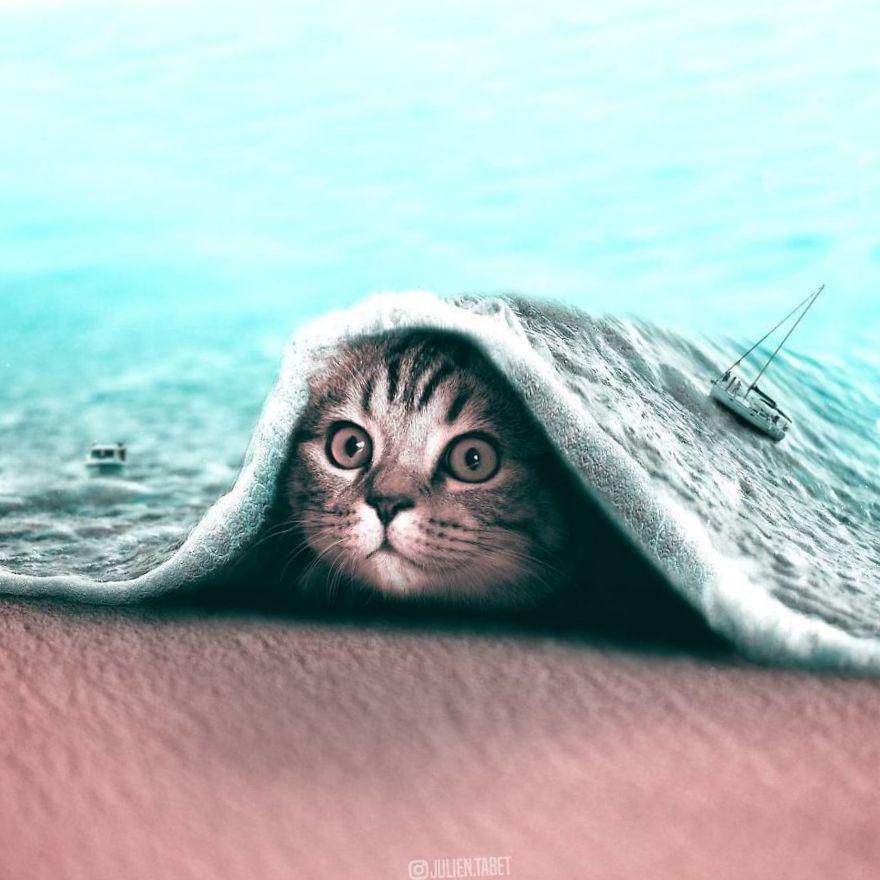 коллаж котенок и море
