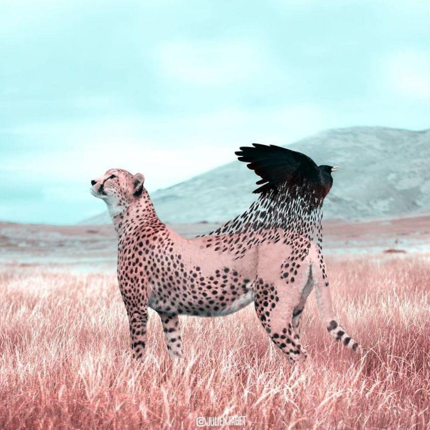Коллаж гепард и ворон