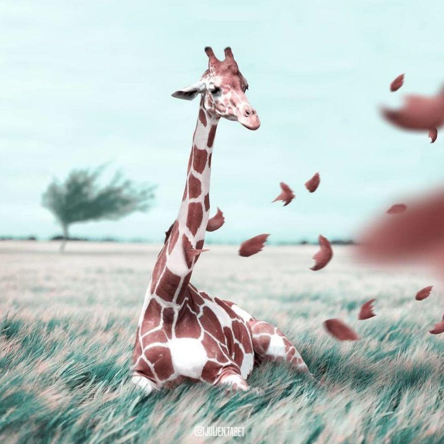 Коллаж жираф