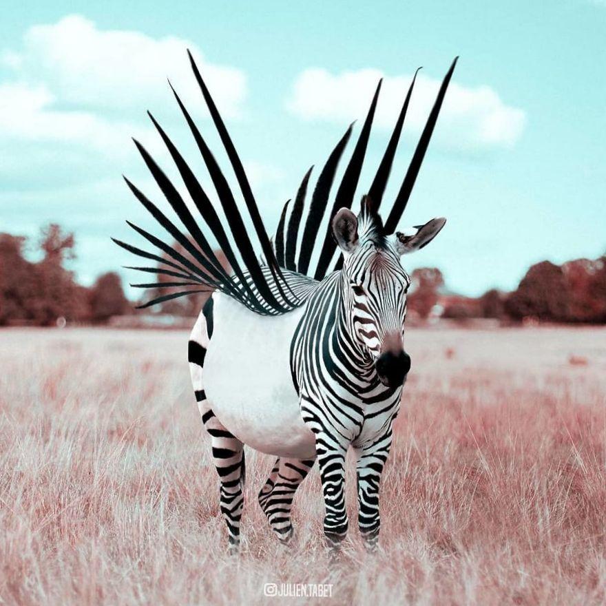 коллаж зебра с крыльями