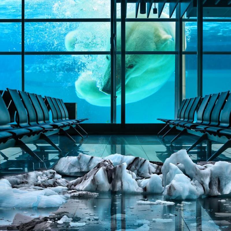 Фотоманипуляции с белым медведем и вокзалом