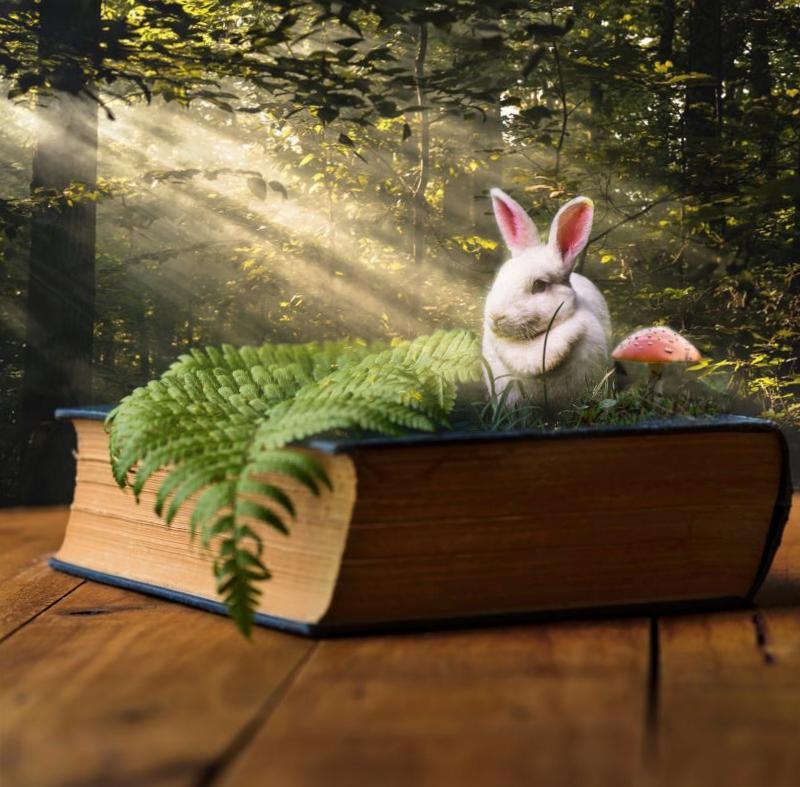 Фотоманипуляция Кролик с книгой