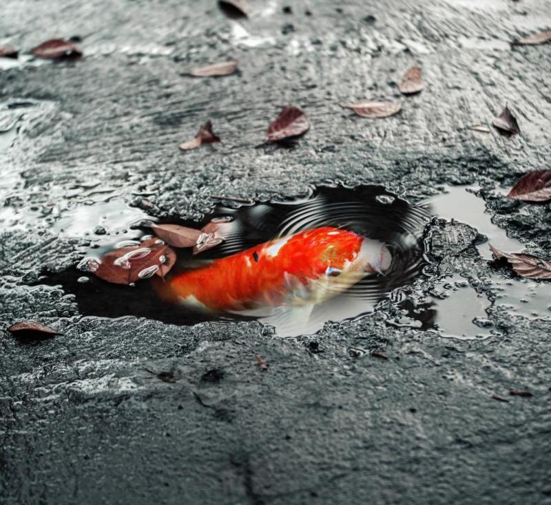 Фотоманипуляции с рыбкой и асфальтом