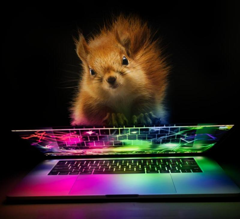Фотоманипуляции с белкой и ноутбуком